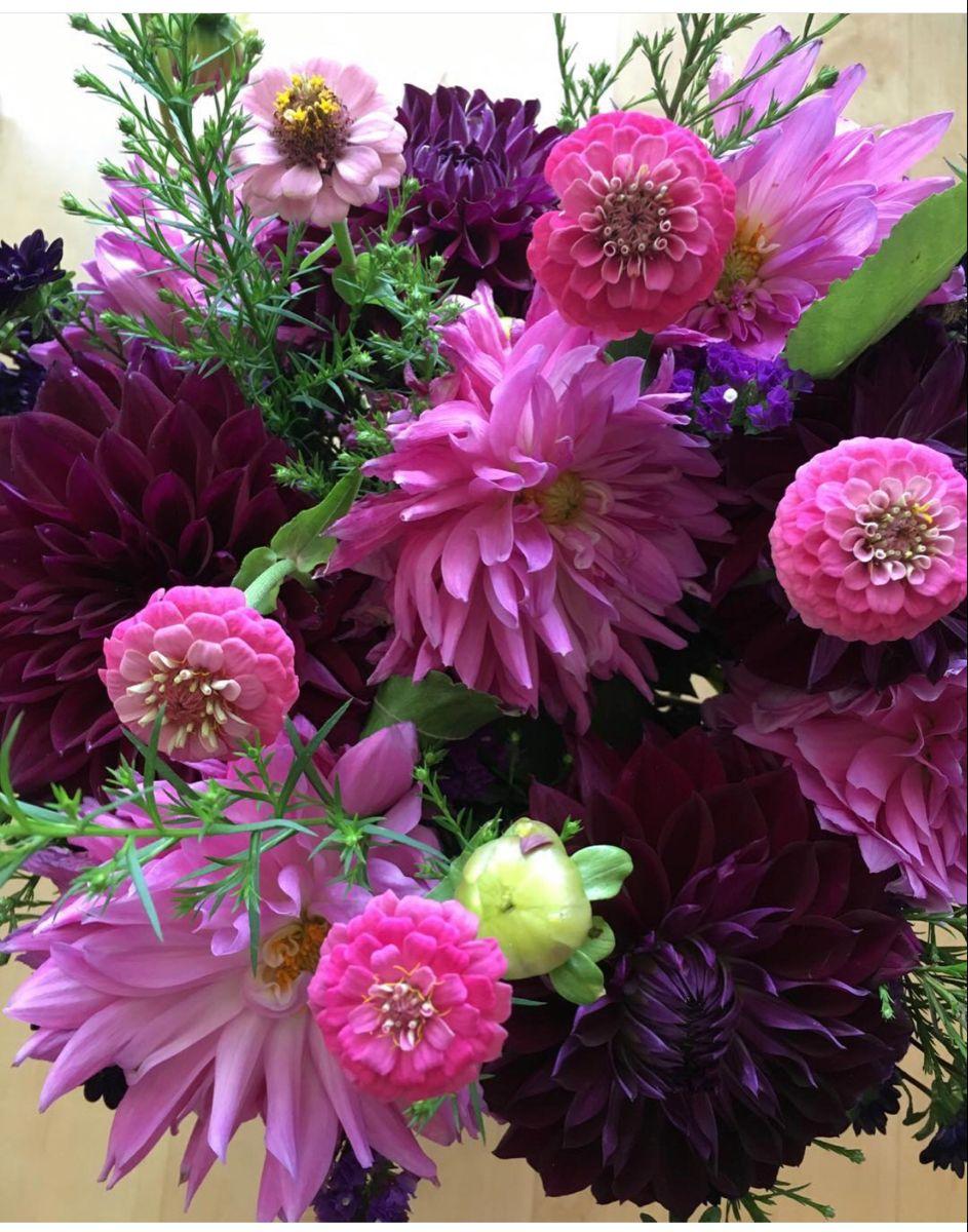 Dahlias Burgundy Flowers At Wholesale Price in 2020