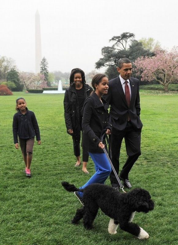 Photo of President Barack Obama's dog Bo being walked by Barack, Michelle, Sasha and Malia on the Whitehouse grounds.  http://www.barack-obama-photos.com/Pictures-Obama-Dog-Bo.html