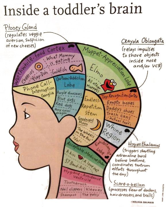 My Paisley World: What's Inside the Brain of a Toddler ...