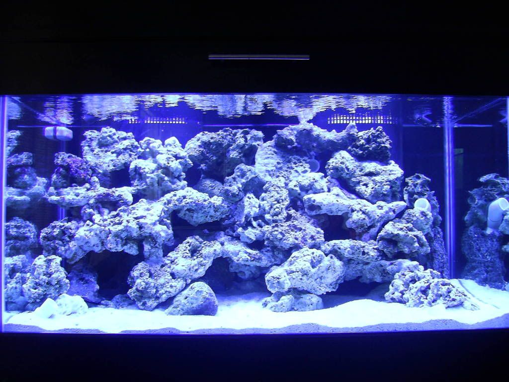 reef aquascaping designs | Your aquascaping pics ...