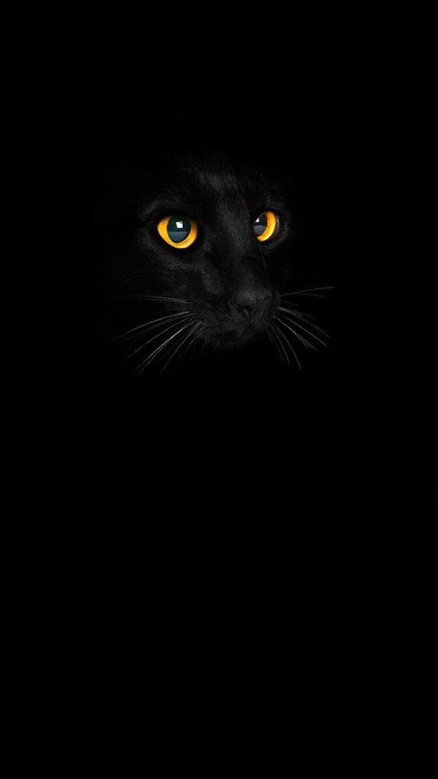 猫のきれいな画像を貼るよー Cat Phone Wallpaper Cat Wallpaper