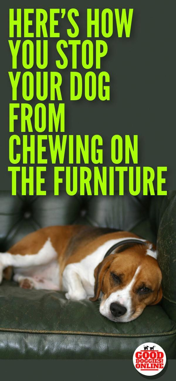 If Your Dog Or Puppy Is Chewing On The Furniture Check Out These
