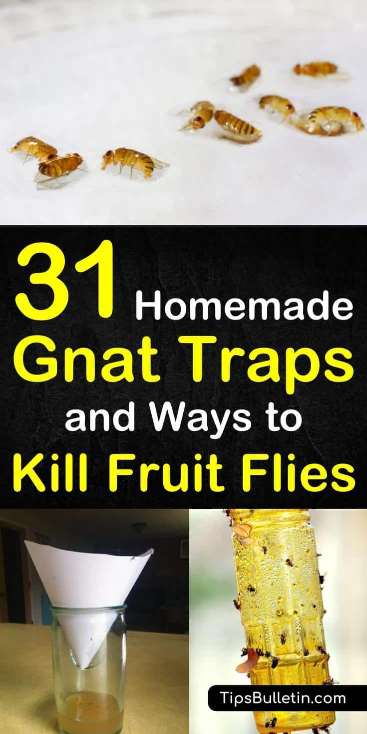 31 Homemade Gnat Traps and Ways to Kill Fruit Flies #gnats Gnats and fruit flies, while tiny, are extremely annoying little pests. If you are dealing with a gnat infestation, here are 31 homemade gnat traps and ways to kill fruit flies. #gnats