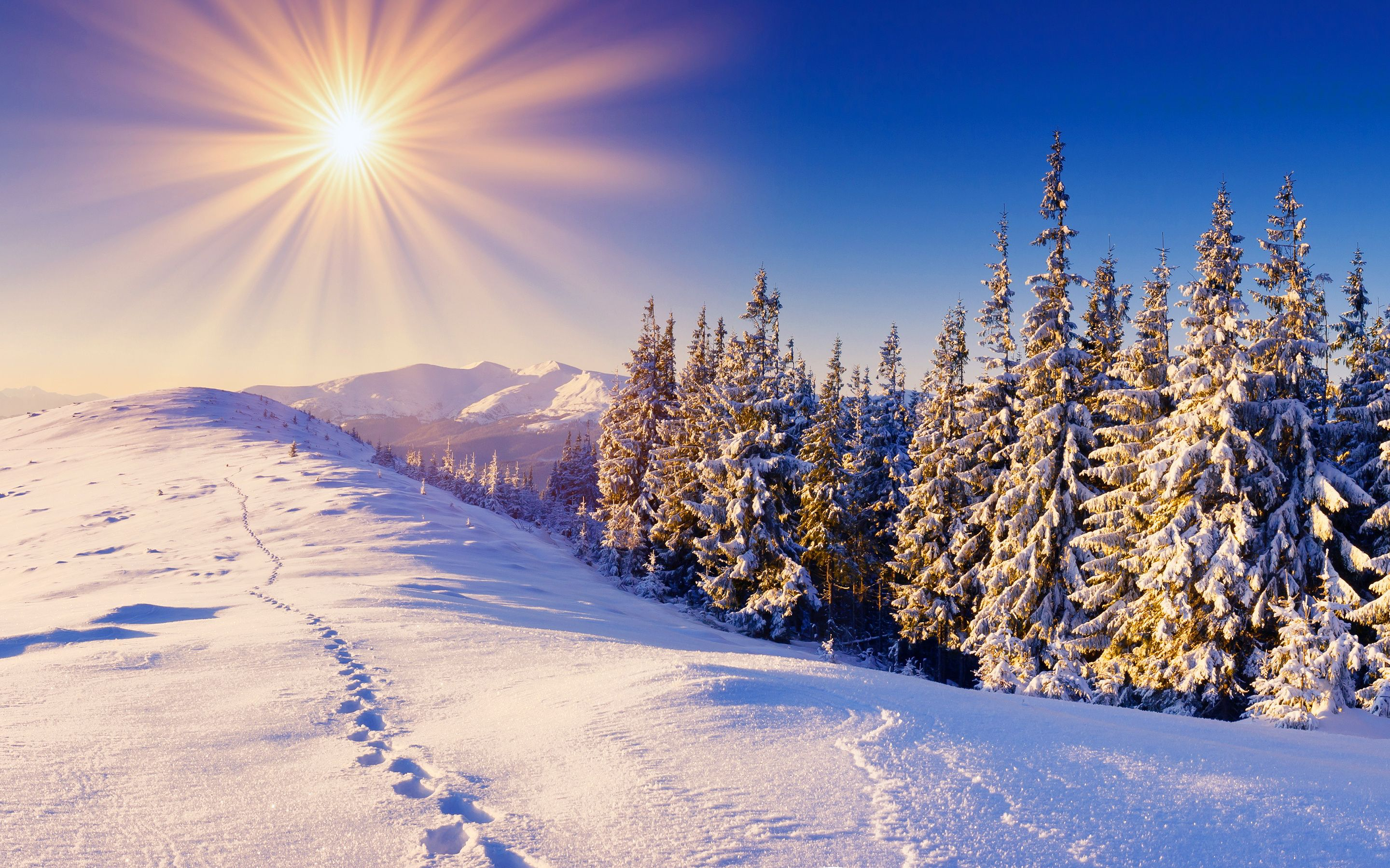 solar winter sun snow Winter wallpaper, Winter
