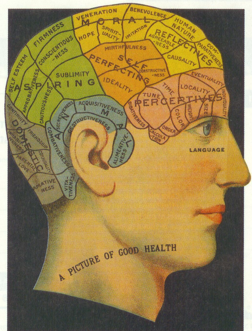 This Image Shows The Map Of The Brain And It Relates