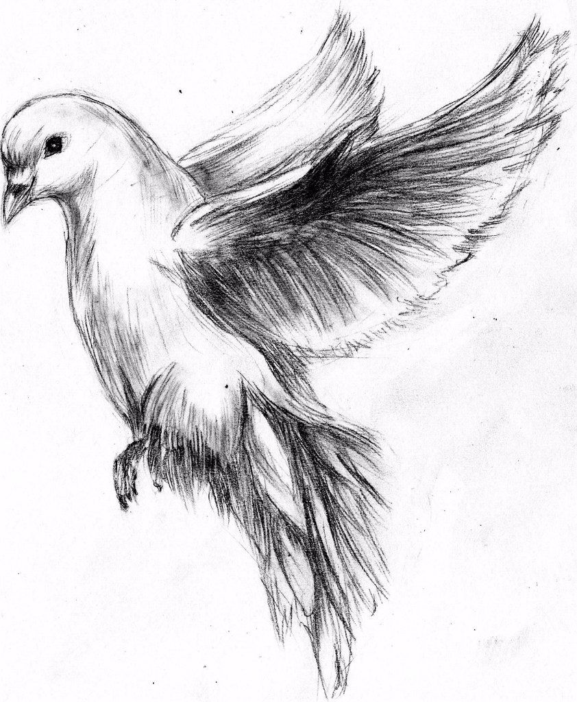 Quick sketch of dove by MaXymuSFM on DeviantArt | Sketches ...