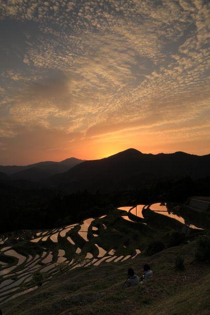 Sunset in Terraced Rice-Fields(Maruyama-senmaida), Kumano, Mie, Japan