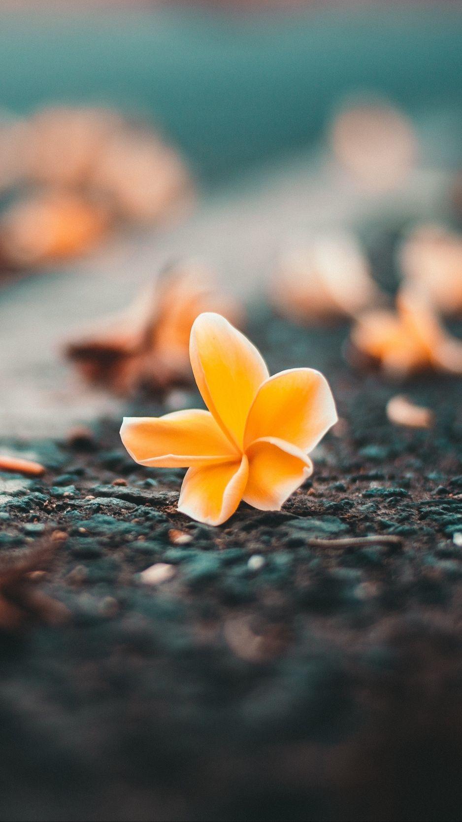 Ceratostylis Flower Close Up Blur Wallpaper Background Hd Flower Wallpaper Flower Phone Wallpaper Flower Wallpaper