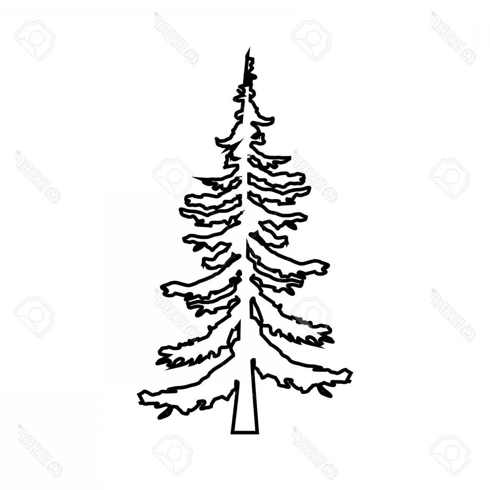Evergreen Tree Outline Vector Photostock Vector Fir Tree Pine Tree Line Icon Ou Evergreen Fir Icon Line In 2020 Tree Outline Pine Tree Drawing Evergreen Trees