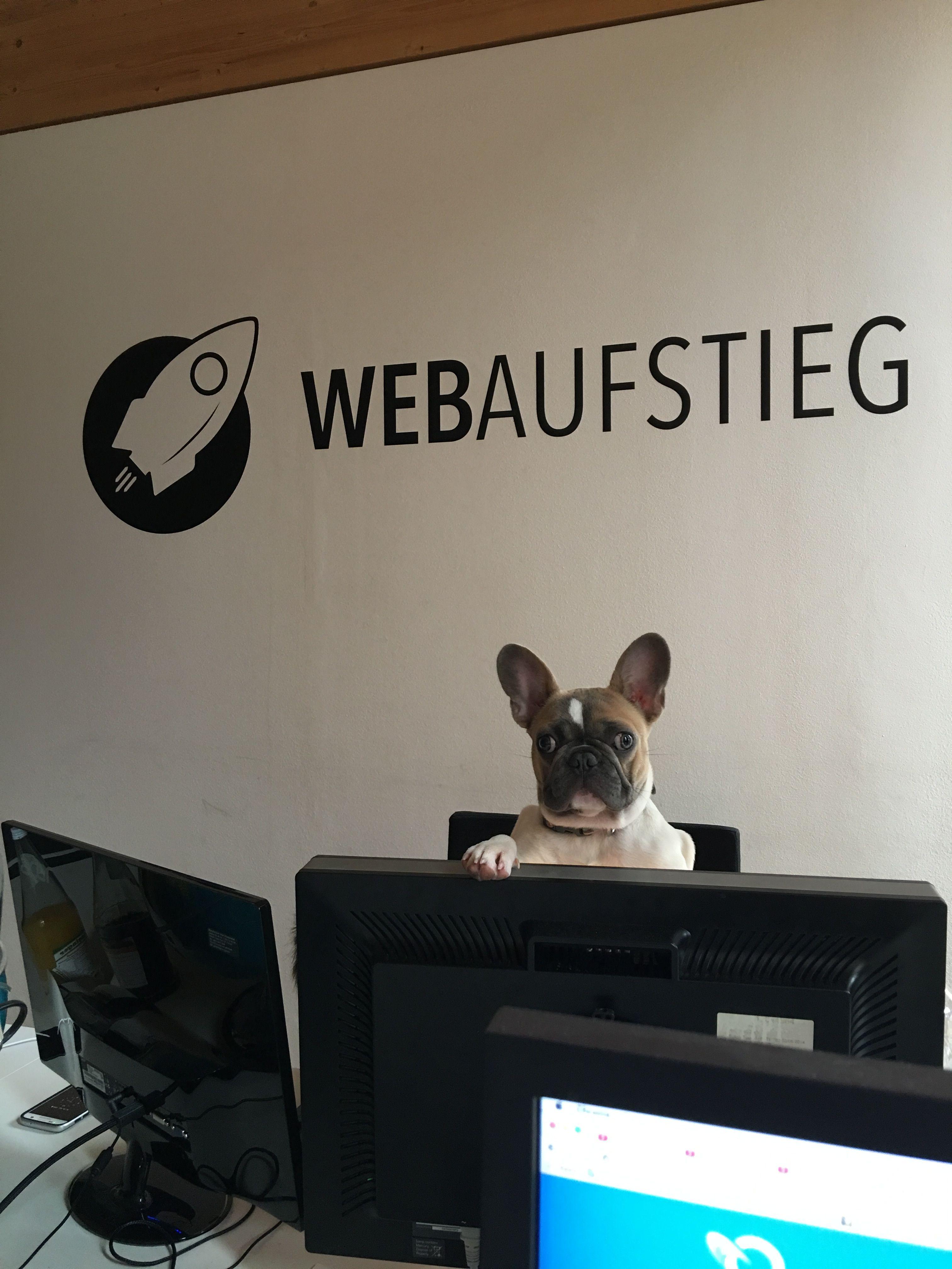 Unser Bürohund Murphy beim programmieren :-)