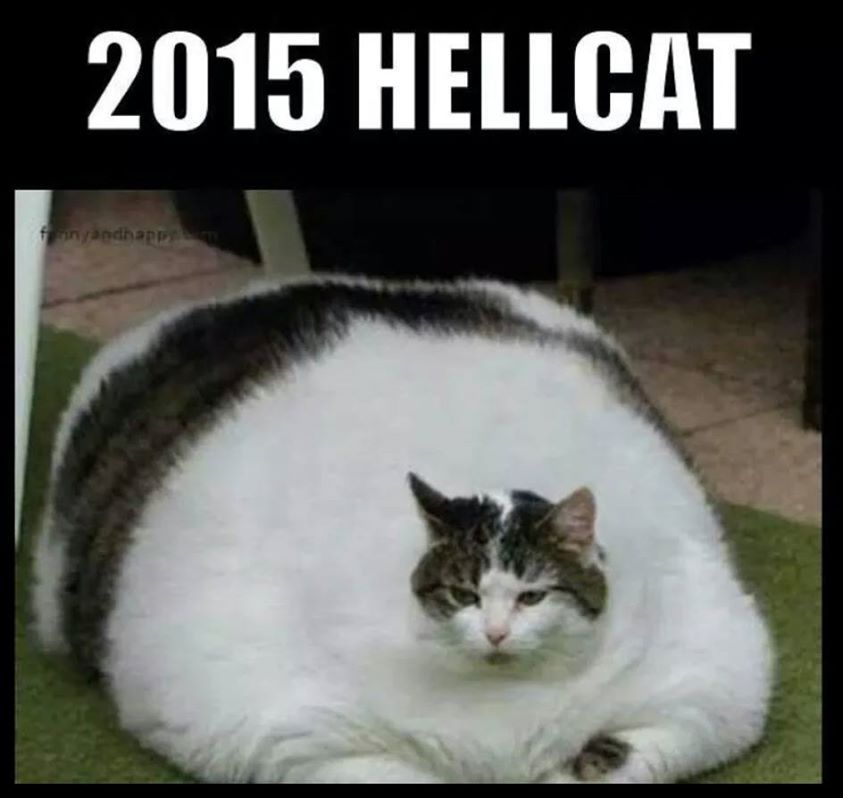 Here kitty kitty Silly cats pictures, Funny cats