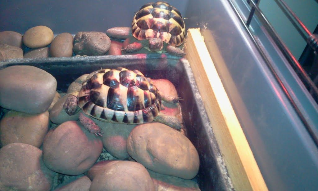 This is how we like to relax on a cold day. Under the heat lamp on the warm stones...