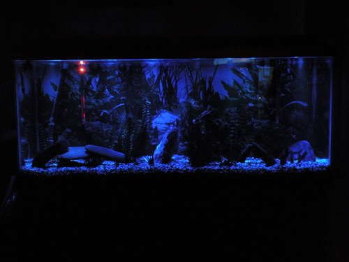 LED Aquarium Moonlights nachtlicht ledstrip a 40u20ac. & LED Aquarium Moonlights | Pinterest | Aquariums and Moonlight