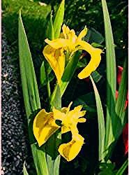 Photo of Sumpfpflanzen