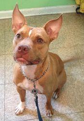Adopt Mason On Cute Animals Dog Adoption Puppies