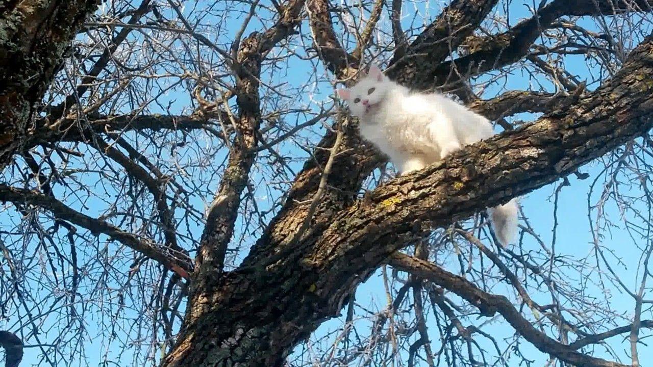 Кошка на дереве. | Природа, Кошки, Дерево