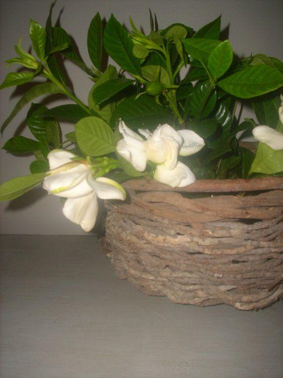 Love the gardenias in the basket!
