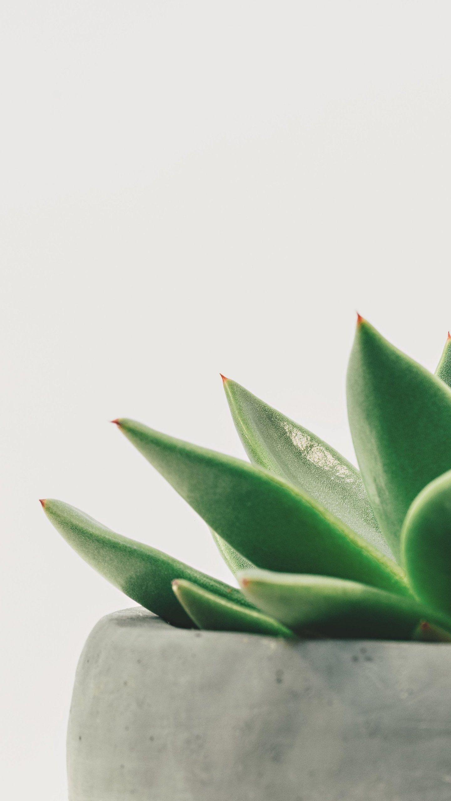 Minimalist Succulent Wallpaper iPhone, Android & Desktop