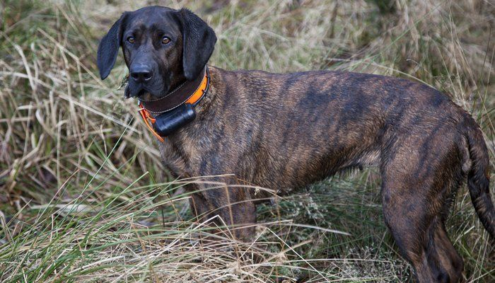 15 Vital Safety Tips For Training Dogs With Shock Collars Best