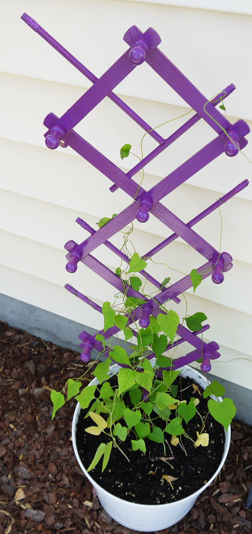 painted trellis from accordian coat rack GREAT FOR ENGLISH IVY OR ANY INDOOR TRAILING PLANT