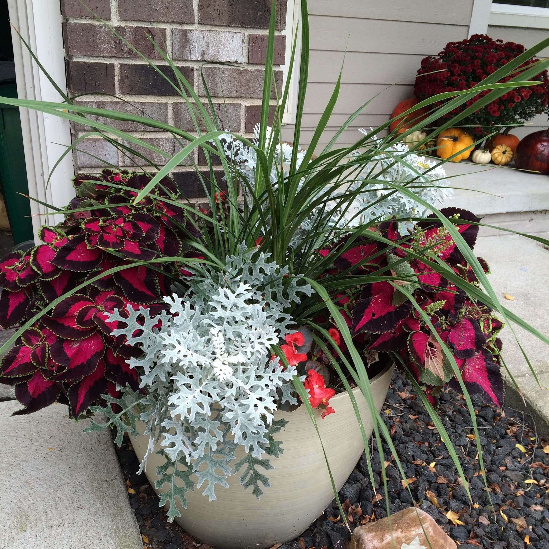 Make A Shade Loving Container Garden  Sometimes Homemade