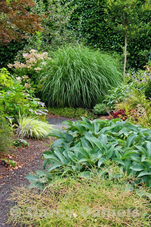 Vignettes Darcy Daniels Darcydaniels Garden Landscape Design Plants Garden Design