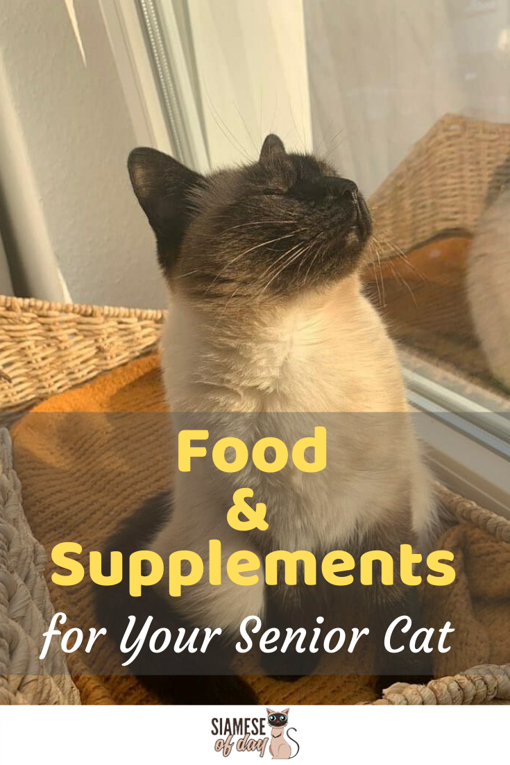 Siamese Cat Aging New Diet And Lifestyle Changes Siamese Cats Senior Cat Cats