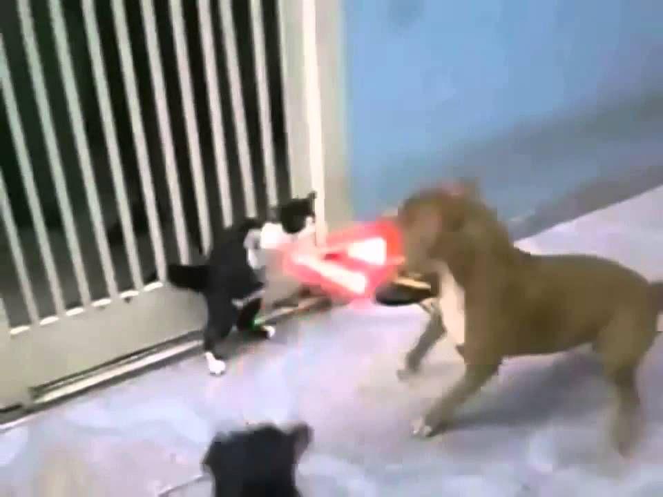 Jedi Cat Fighting Dog Gato Jedi Peleando Con Perro 2015 Cat Gif Funny Gif Cute Gif