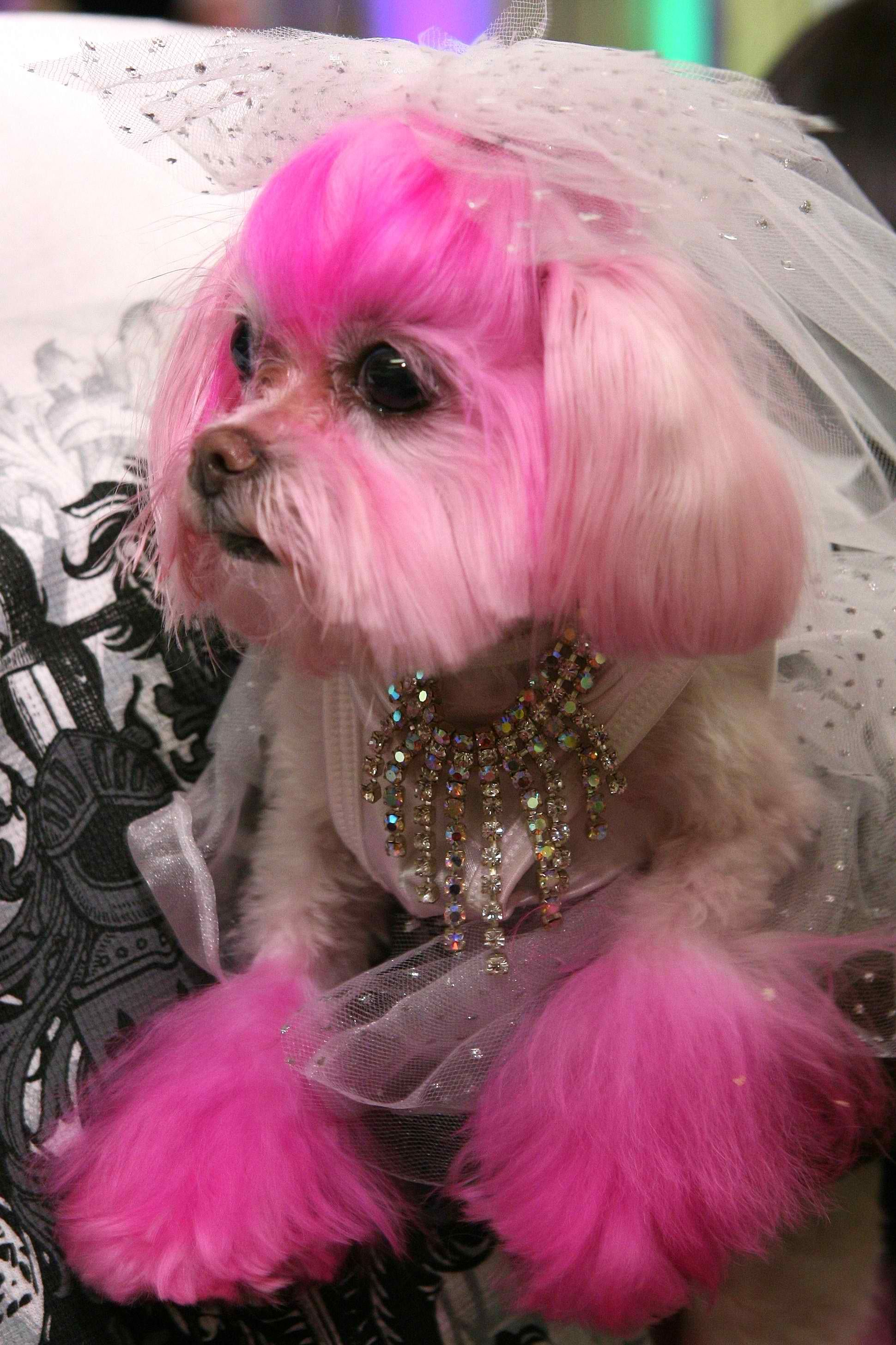 Pin On Lovely Pooch Couture