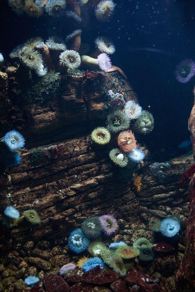 underwater anenomes