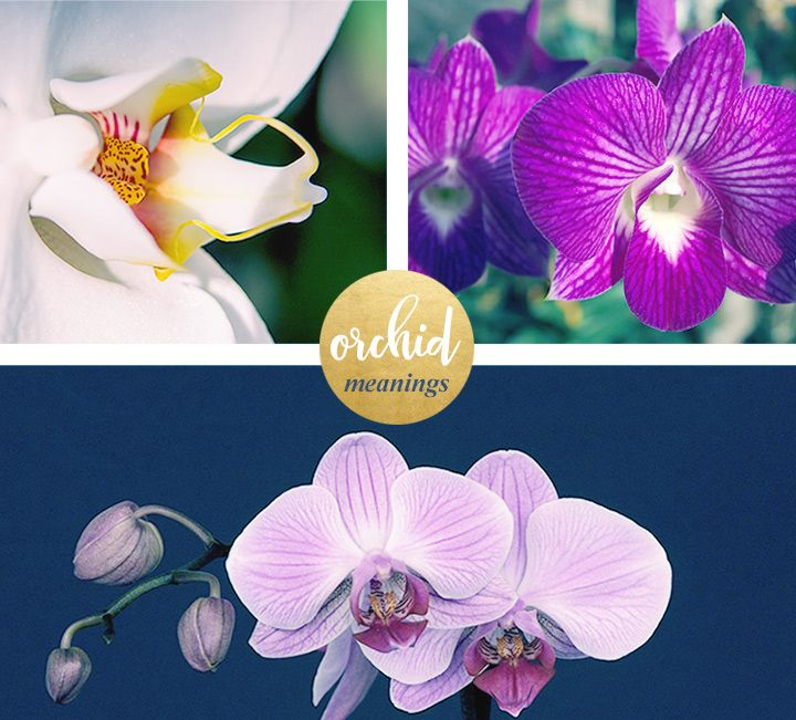 Orchid Meaning And Symbolism Greek Words Exotic Flowers And Orchid
