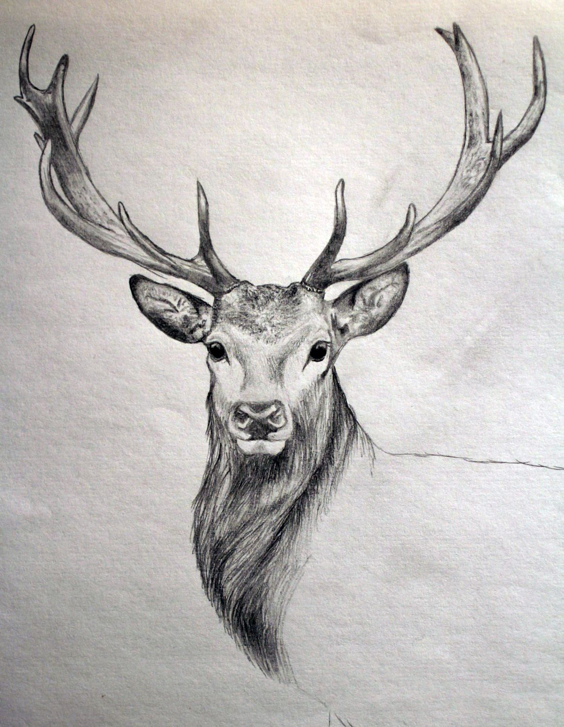 deer antlers drawing easy - photo #33