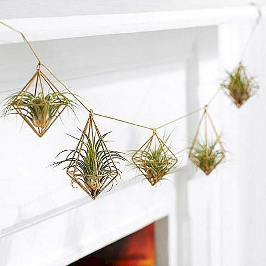 Diy Hanging Air Plant Ideas