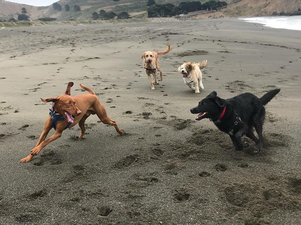 Pawsitive Energy Dog Trainer In San Mateo California