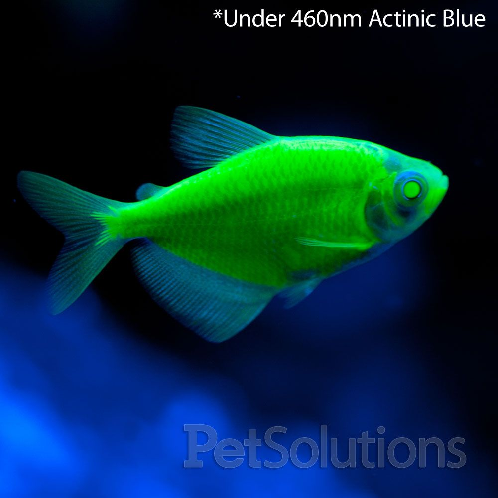 Freshwater Aquarium Fish Under 1 Inch - Fish