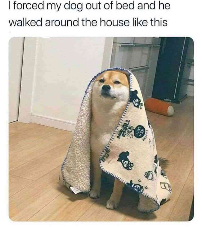 Nothing But The Bestest Boys And Girls Dog Memes In 2021 Dog Memes Cute Funny Animals Funny Animals