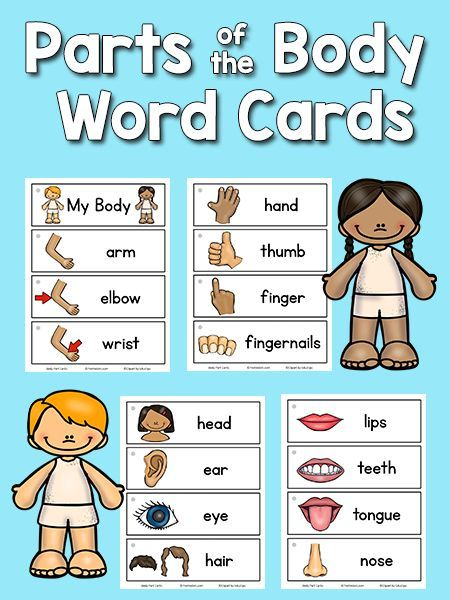 Diagram of the body parts preschool diy enthusiasts wiring diagrams body parts picture word cards powerful pre k pinterest rh pinterest com ant body parts dog body diagram ccuart Image collections