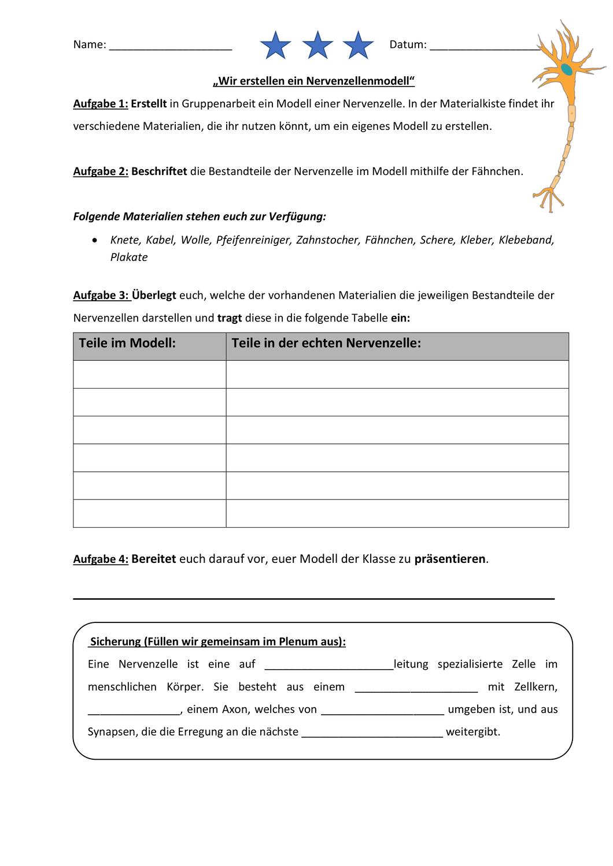 Modellbau einer Nervenzelle – Unterrichtsmaterial im Fach Biologie ...