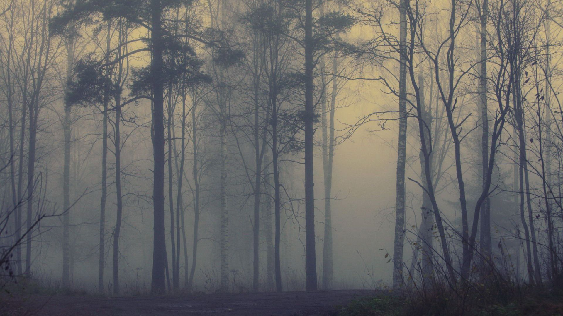 Wallpaper Forest Fog Forest Wallpaper Foggy Forest Misty Forest