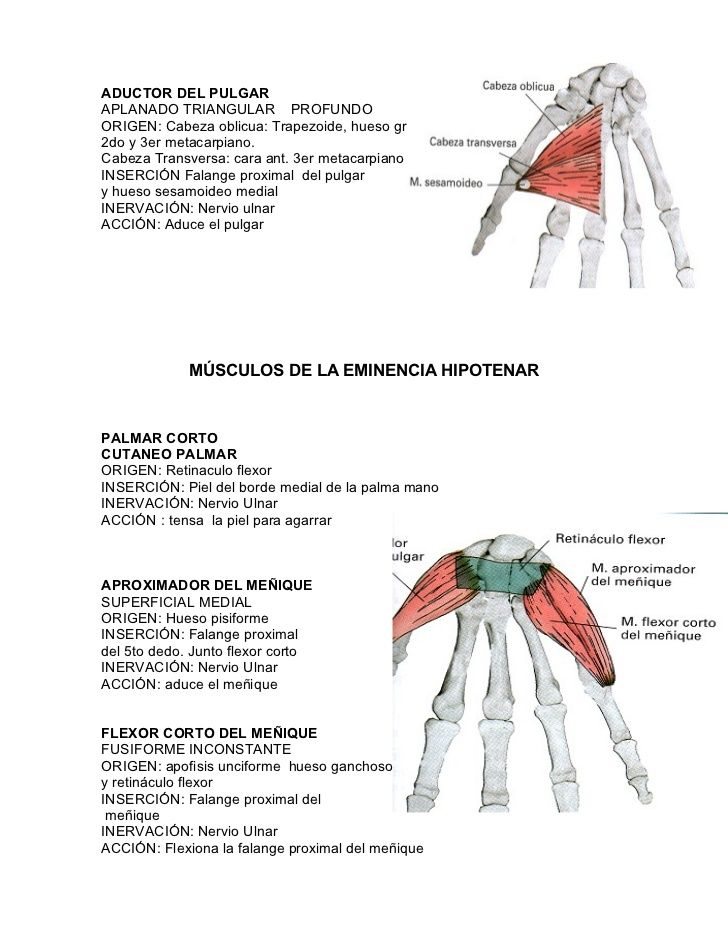 Musculos Mano | terapia ocupacional | Pinterest | Músculos, Las ...