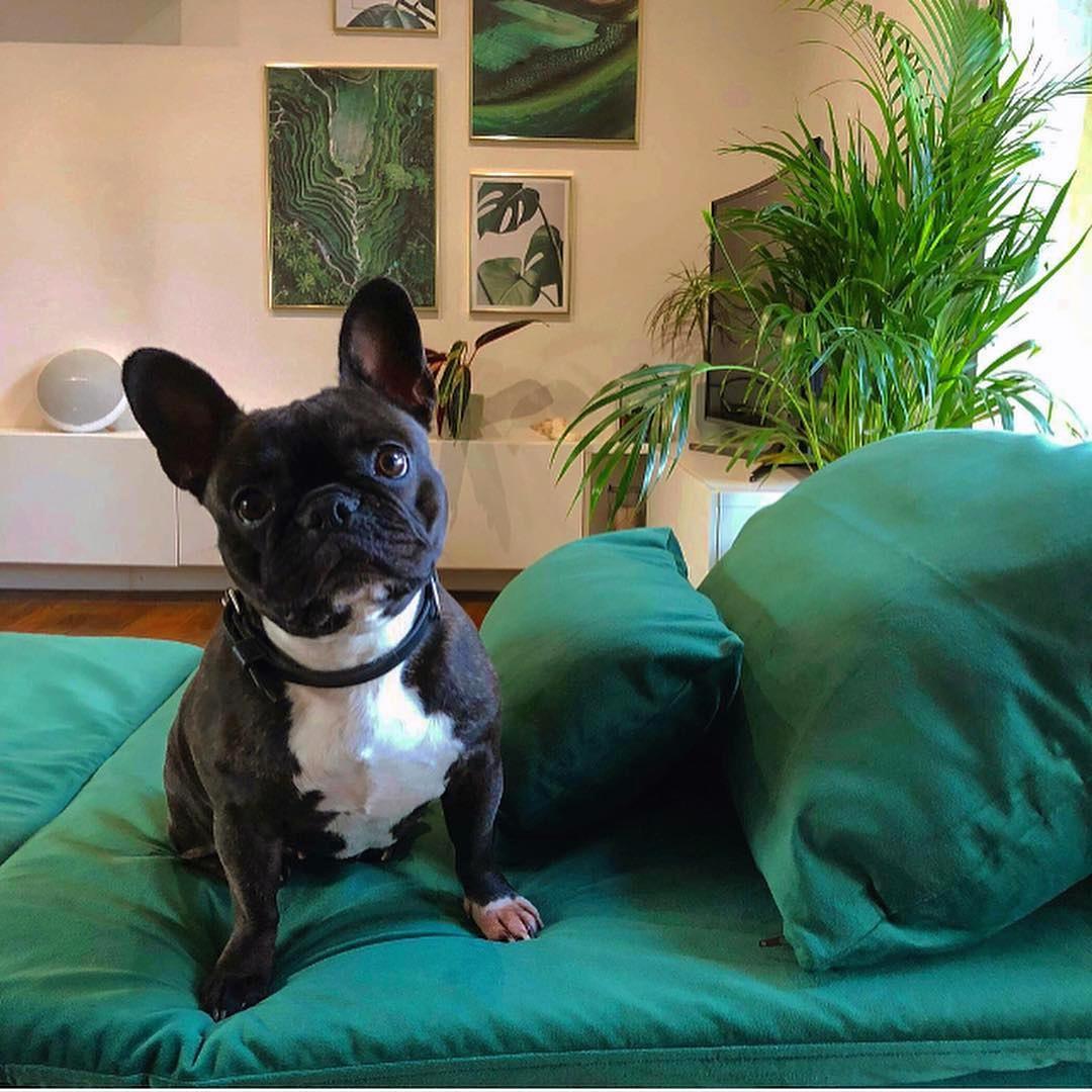ikea soderhamn chaise lounge sofa