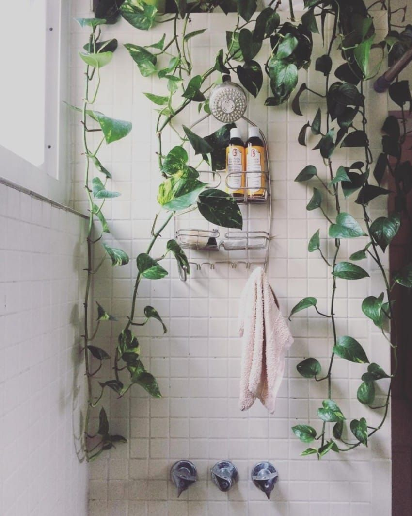 A Strange New Design Trend Has People Everywhere Filling Their Showers With Plants is part of Living Room Plants Cleanses - If you have a green thumb, you're in luck, as shower plants are the latest new trend in interior decorating  Now, people everywhere are asking would you shower with a plant  The design trend is just the latest in a wave of aesthetic affection for indoor plants  Though the garden once reigned supreme, more and