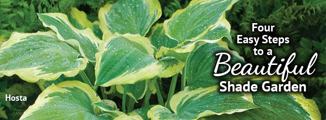 Four Easy Steps To A Beautiful Shade Garden From Pike Nurseries