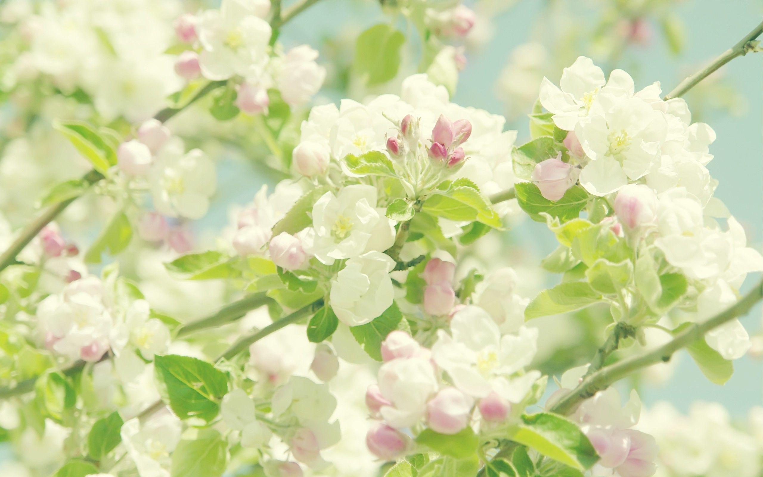 Pastel Floral Wallpaper Desktop Leo Apple Flowers Blooming