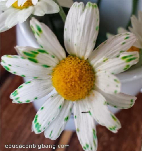 experimento con flores y colorante