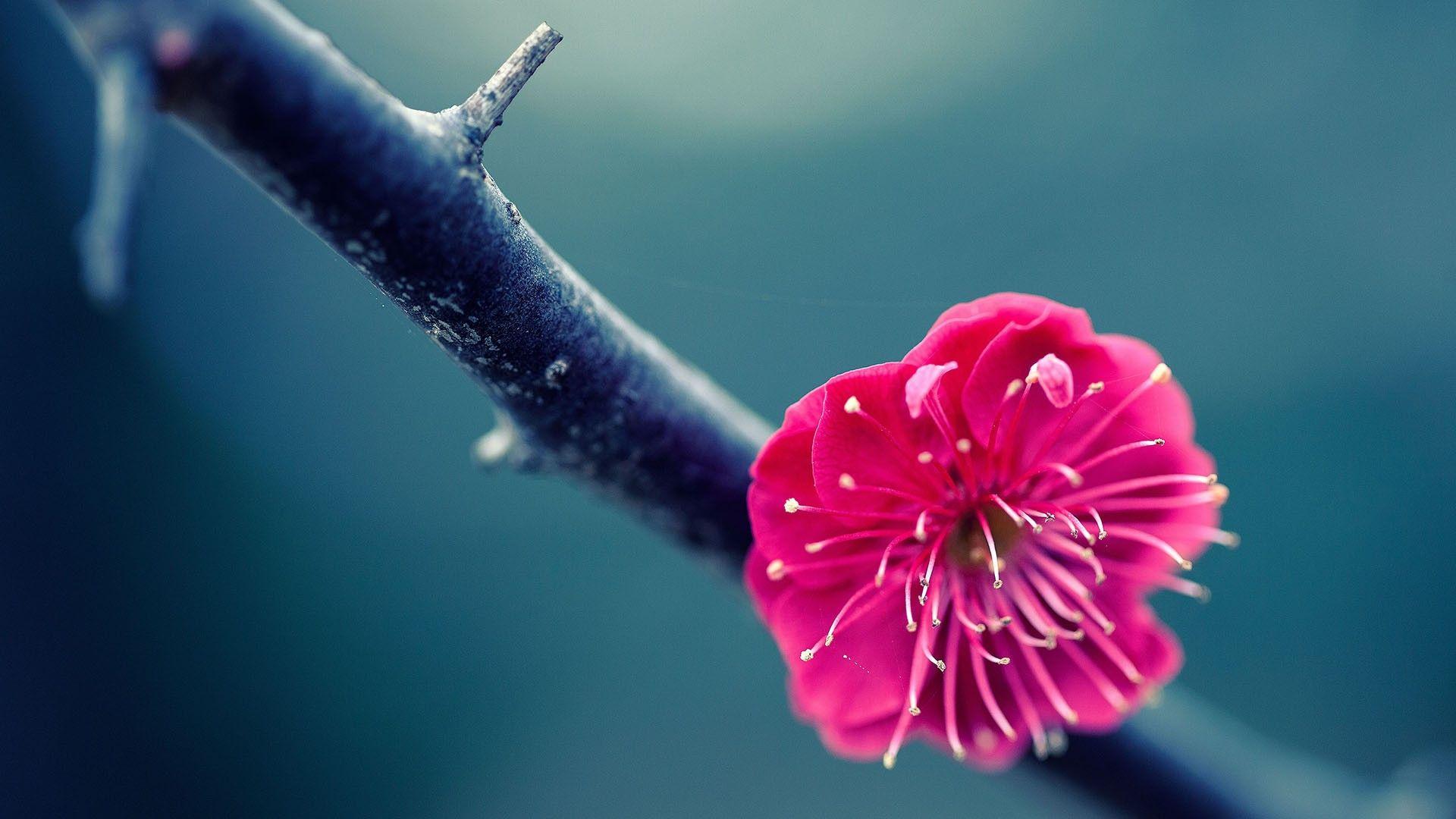 Flower Flowers Nature Beautiful Pretty Blue Macro Wallpaper Iphone