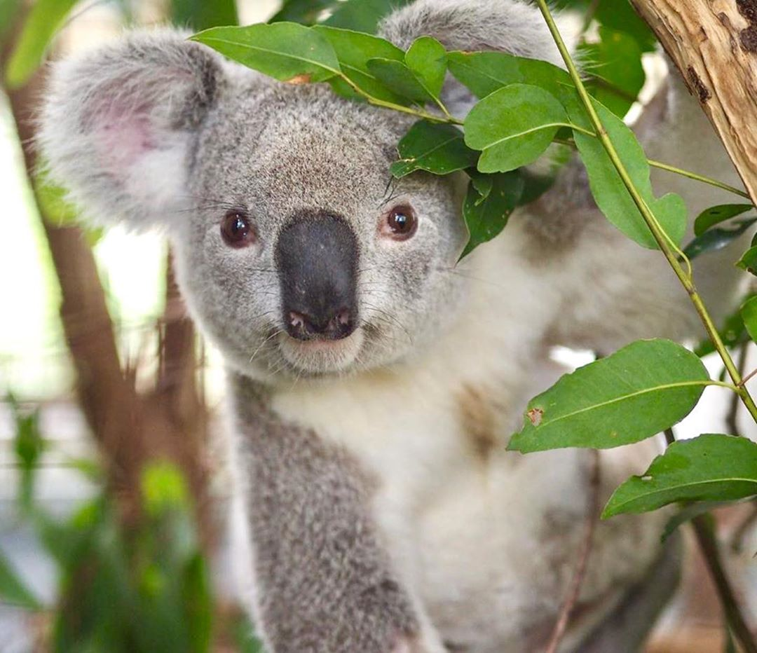 Australia Zoo On Instagram When You Visit Australiazoo All Profits Go Towards Protecting Wildlife And Wil Australian Mammals Cute Funny Animals Cute Animals