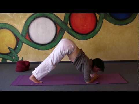 dolphin  preparing yoga headstandstrengthening your