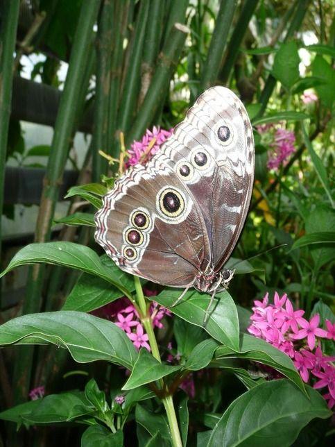 Butterfly Garden Gainesville Florida Libellen Schmetterling