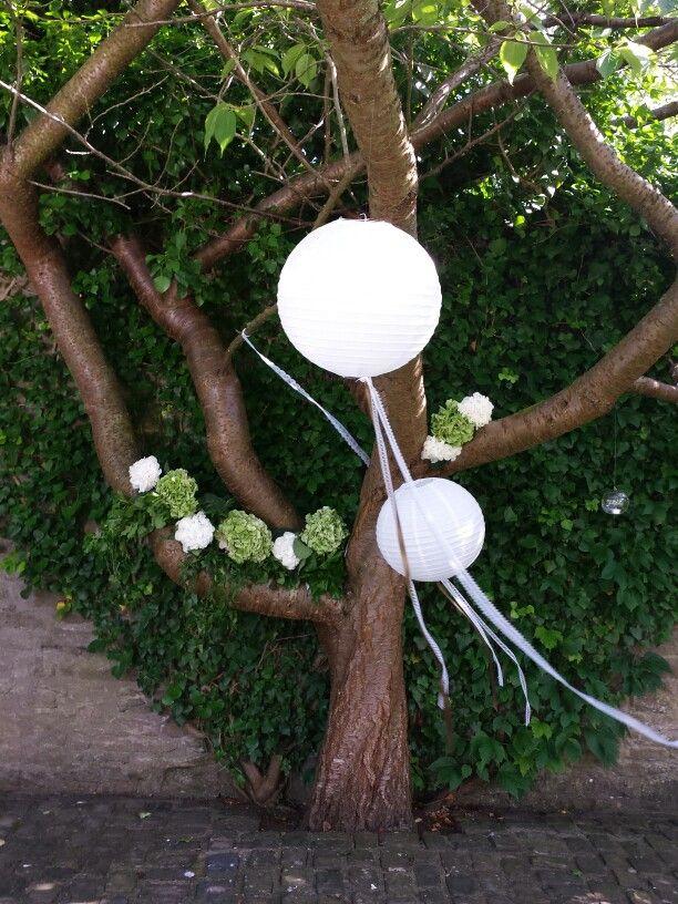 Tin Can Fl Elizabeth Weddings Wishing Tree Www Tincanfl Co Uk